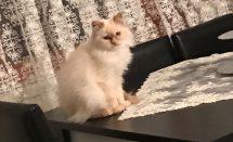 Kedi Çişi Kokusuna Kesin Çözüm